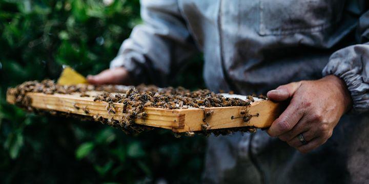 Backyard Beekeeping Workshop – Mayfield