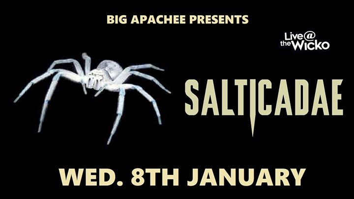 Salticadae – Live@TheWicko