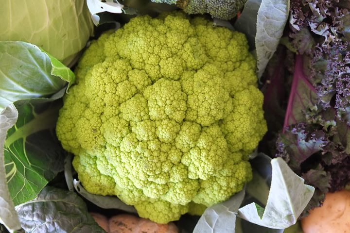 4th June – Slow Food Earth Market Maitland