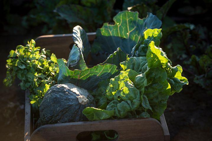 3rd September – Slow Food Earth Market Maitland