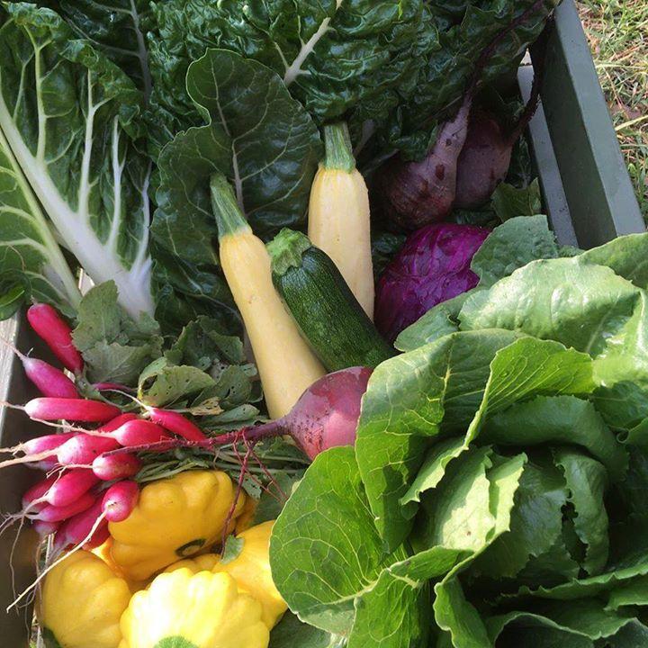 3rd December – Slow Food Earth Market Maitland