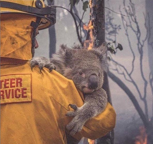 Movie Fundraiser for the Bushfires