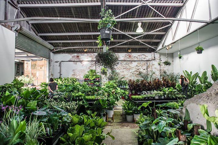 Sydney Virtual Pop-up shop – Huge Indoor Plant sale