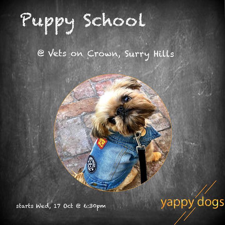Zoom Online Puppy School