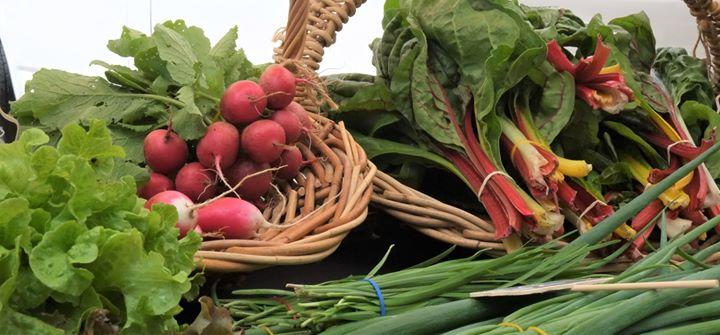 5th November – Slow Food Earth Market Maitland