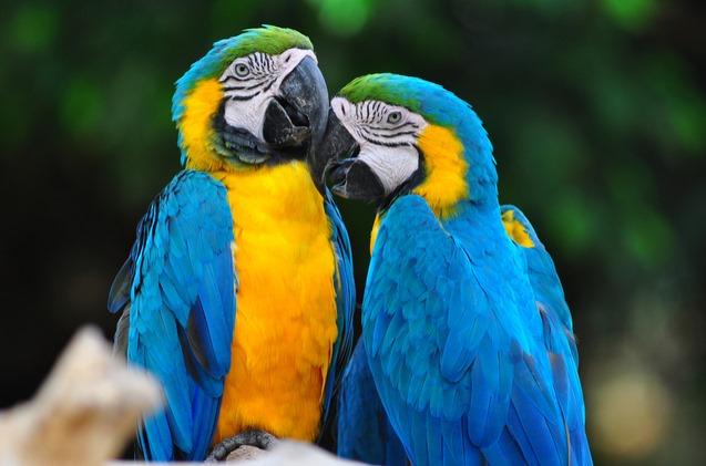 Bird Encounter NSW School Holidays